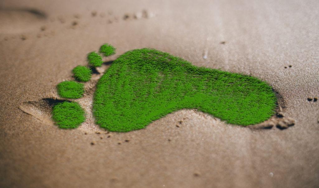 El efecto de tu consumo en el medio ambiente